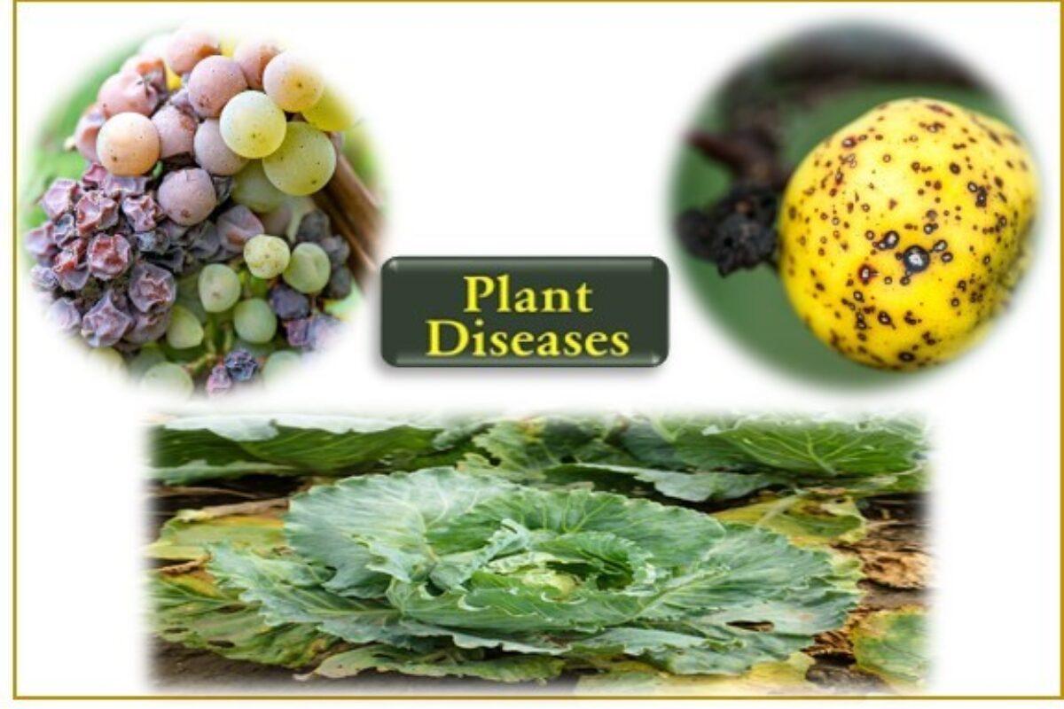 Plant Disease List