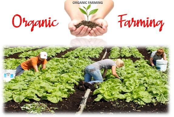 Organic Farming Book/PDF