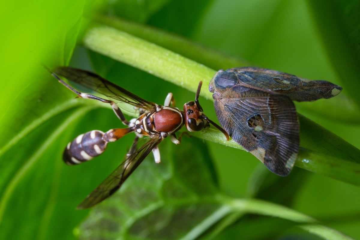 Entomology SKNAU All Notes PDF