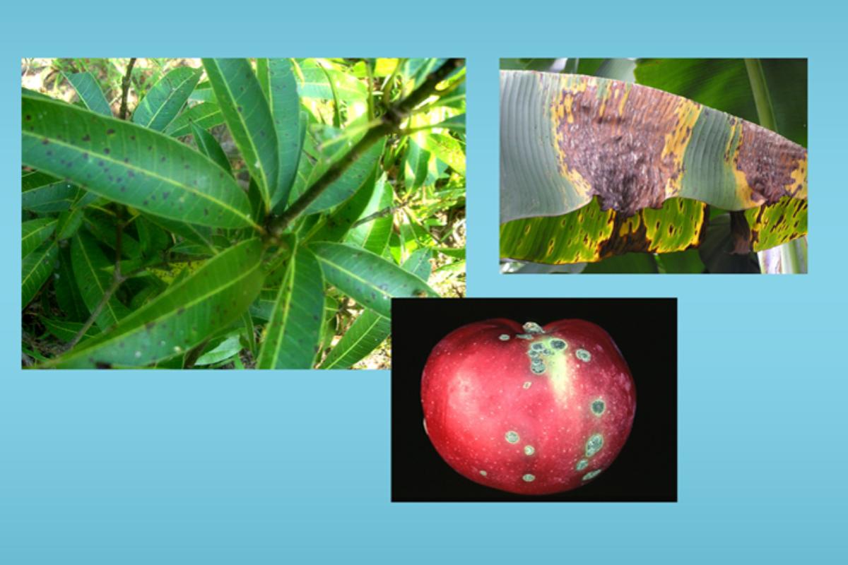 Plant Pathology SKNAU Notes